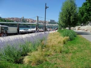 Réaménagement de berges du Rhône