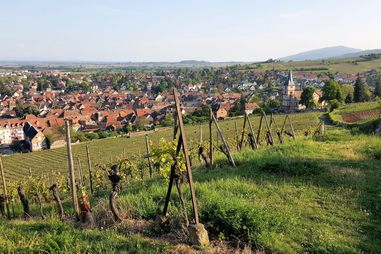 Vosges-du-nord-paysagesreconquis